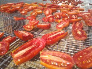 secado de tomate pera
